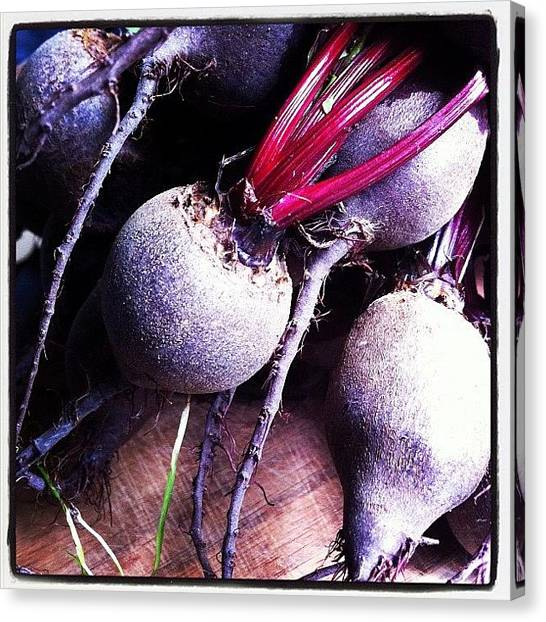 Farmers Canvas Print - Beetroot by Katie Alleva