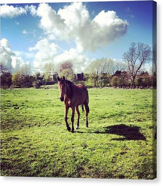 Hunting Canvas Print - Beety :) #geldings by Caitlin Hay