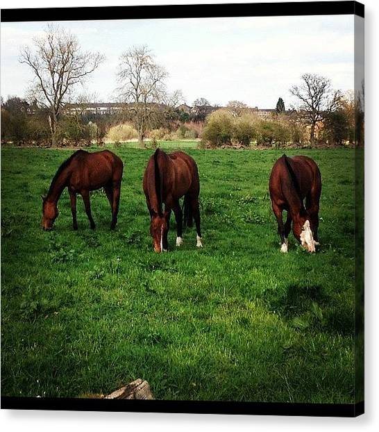 Hunting Canvas Print - Beety, Fred And Bubba :* #horses by Caitlin Hay