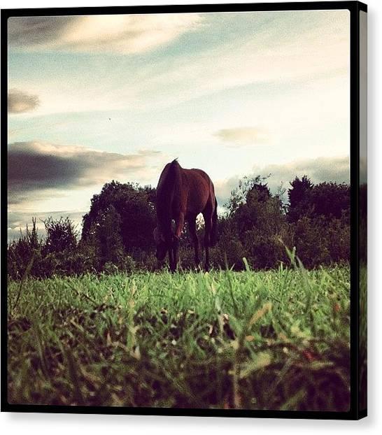 Hunting Canvas Print - Beety:3 by Caitlin Hay