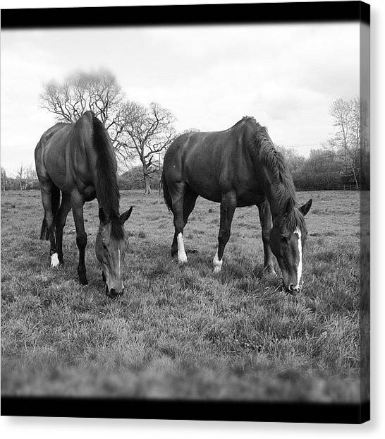 Hunting Canvas Print - Beety&alfie #horses #hunters #sky by Caitlin Hay