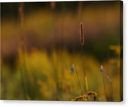Impressionistic Canvas Print - Before The Sun Sets by Susan Capuano