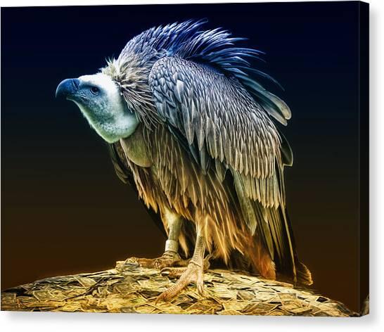 Vultures Canvas Print - Beggars Banquet by Joachim G Pinkawa