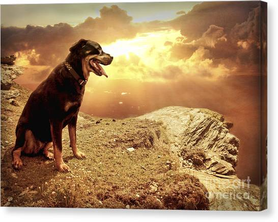 Rottweilers Canvas Print - Bella My Rottweiler by Eugene James