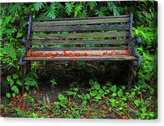 Bench And Flowers- St Lucia. Canvas Print by Chester Williams