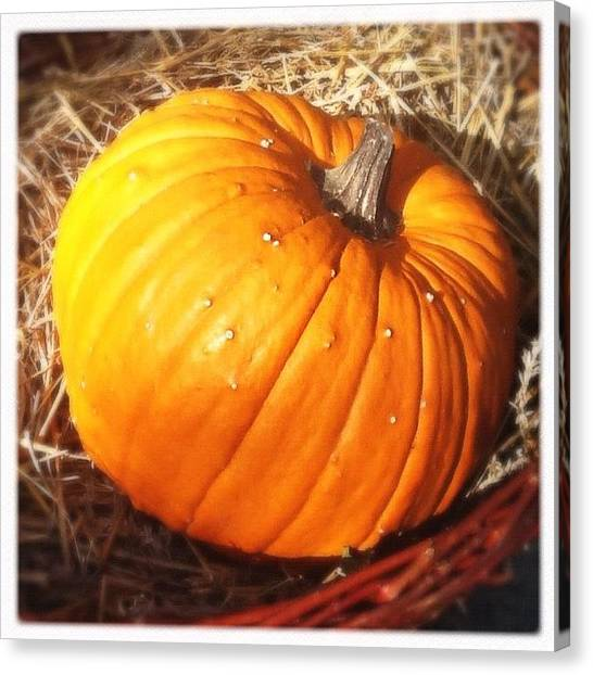 Pumpkins Canvas Print - #berlin #pumpkin #igers #instaday by Rafael Kinzig