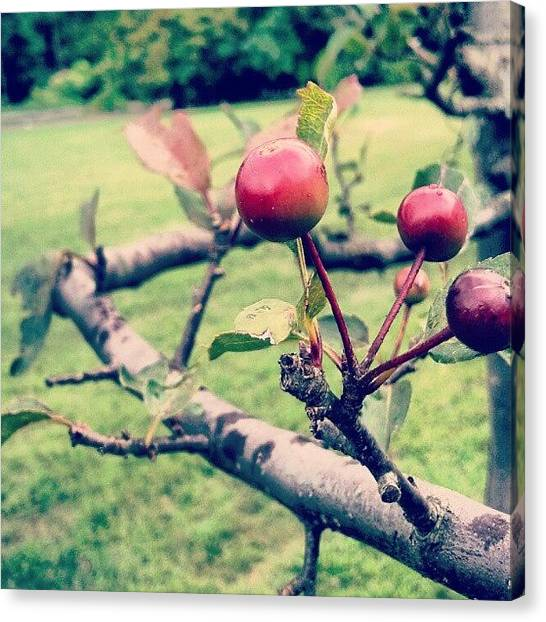 Fruit Trees Canvas Print - Berries :) by Justin August