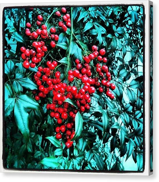 Berries Canvas Print - #berries #flower #bush #nature #unique by Seth Stringer