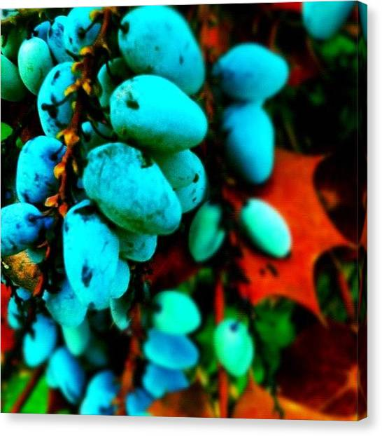 Berries Canvas Print - #berries From A #plant In My #backyard by Seth Stringer