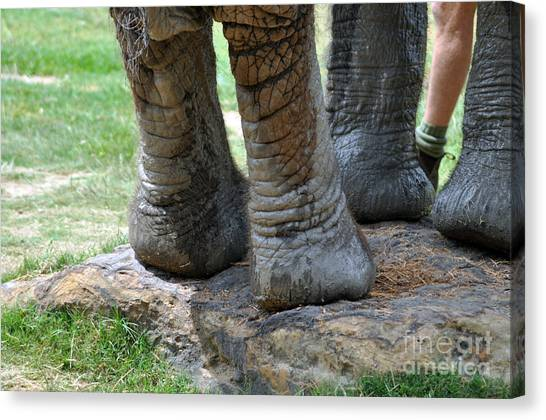 Best Foot Forward Canvas Print by Joanne Kocwin