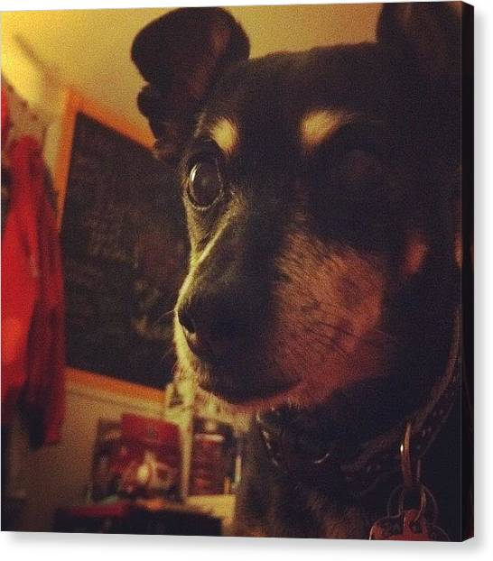 Thanksgiving Canvas Print - #bestdogever #puppy #dog #thanksgiving by Anna Hancock