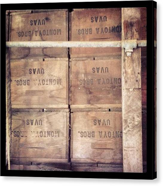 Vineyard Canvas Print - Beyond Vintage by Caitlin Schmitt
