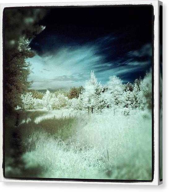 Forest Paths Canvas Print - Bialystok, Poland. First Ever Infrared by Magda Nowacka