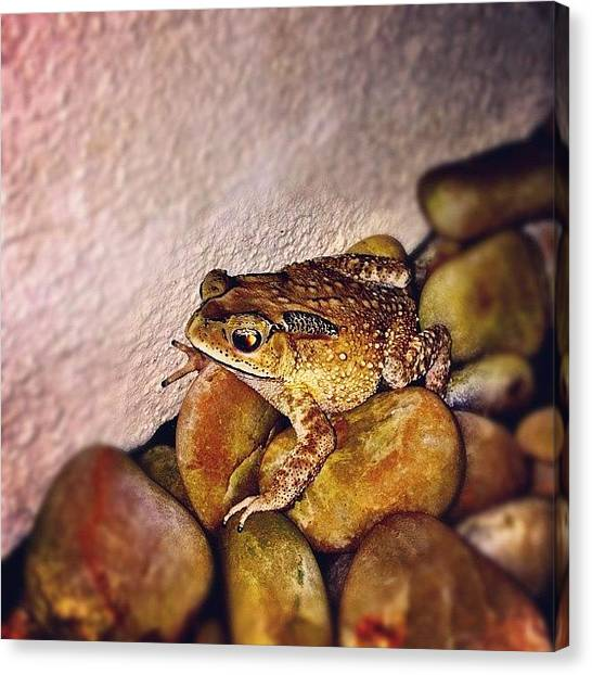 Frogs Canvas Print - Big Frog Spotted At My Rock Garden by Beatrice Looi