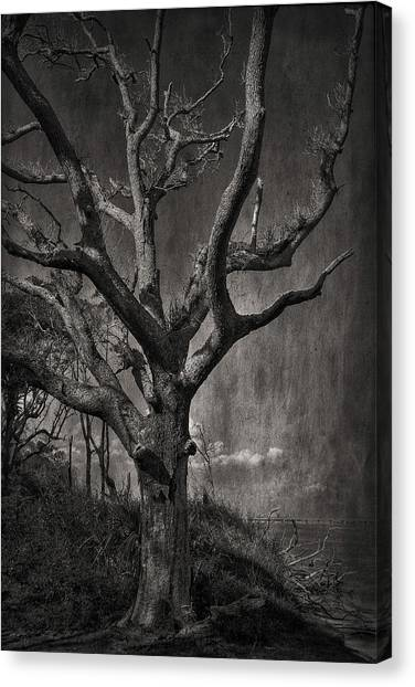 Big Talbot Island Canvas Print