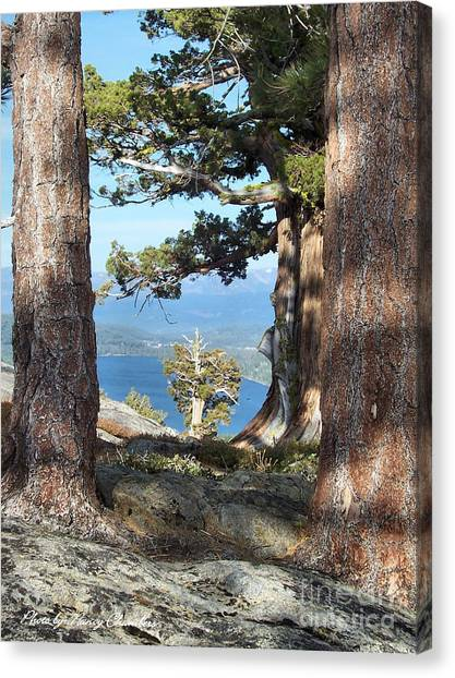 Big Trees Little Tree Canvas Print