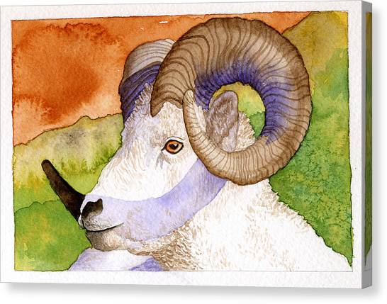 Bighorn Canvas Print by Eunice Olson