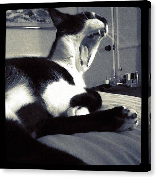 Teeth Canvas Print - Biiig Yawn!! #kitty #cat #pets #feline by Emily W