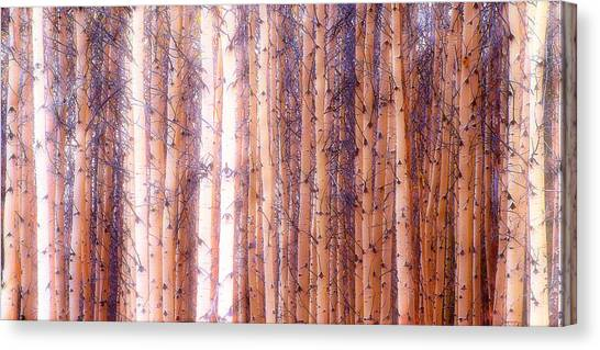 Birch Gathering  Canvas Print
