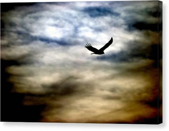 Bird 73 Canvas Print