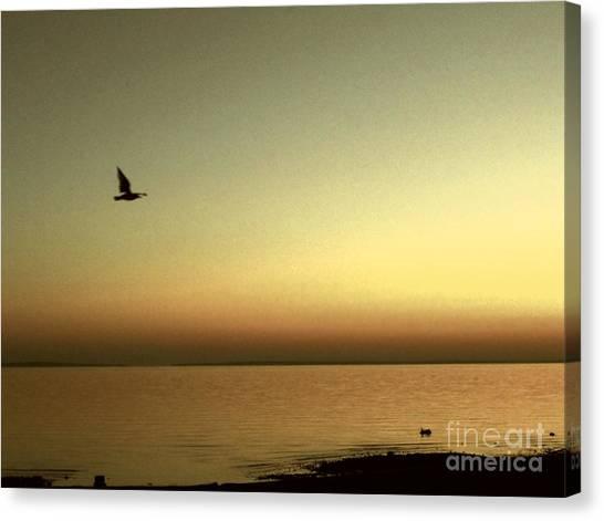 Bird At Sunrise - Sepia Canvas Print