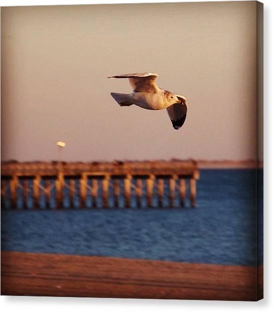 Ocean Sunrises Canvas Print - #bird #beach #birds #bluesky by Julia Meyer