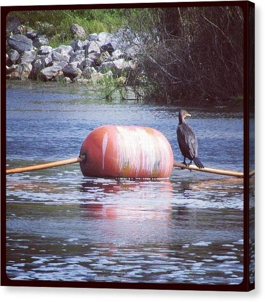 Swamps Canvas Print - #bird #buoy #water #florida #everglades by Michael Hughes