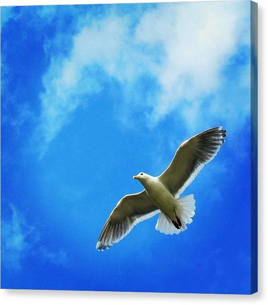 Yen Canvas Print - #bird #fly #sky #blue #0 by Kee Yen Yeo
