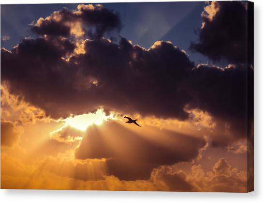 Bird In Sunrise Rays Canvas Print