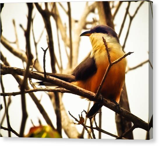 Bird In The Bush Canvas Print