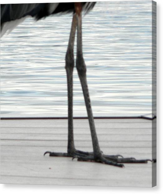 Bird Legs Canvas Print by Christy Usilton