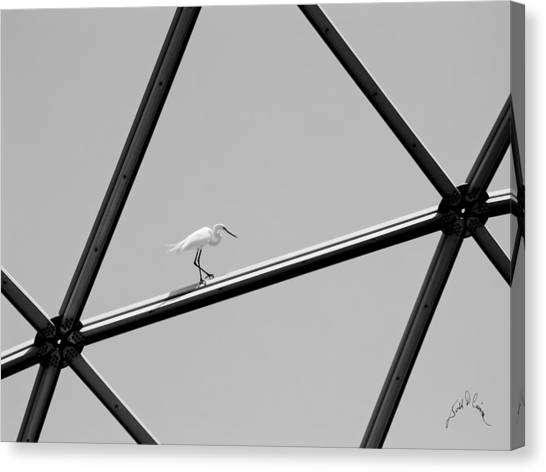Canvas Print featuring the photograph Bird On Structure by Williams-Cairns Photography LLC
