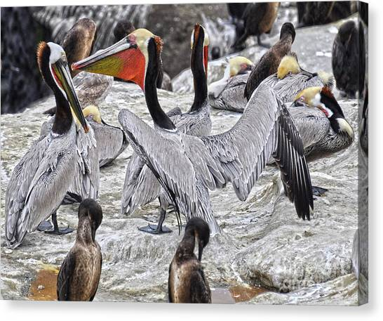 Bird Party  Canvas Print by Judy Grant