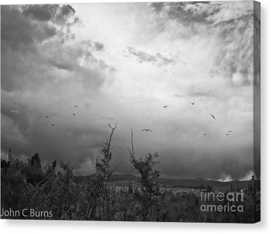 Birds At Mono Lake Canvas Print