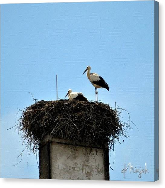 Storks Canvas Print - #birds #born #nest #chilling #white by Qk Ninjah
