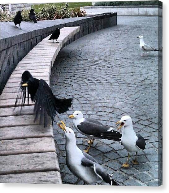 Seagulls Canvas Print - #birds #crow #raven #seagull #seagulls by Kevin Zoller