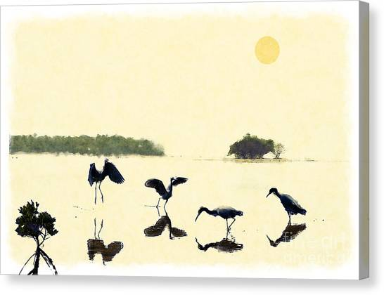 birds feeding in the Everglades Canvas Print