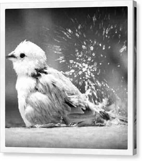 Water Birds Canvas Print - Birds Need Baths Too. #bird by Mary Carter