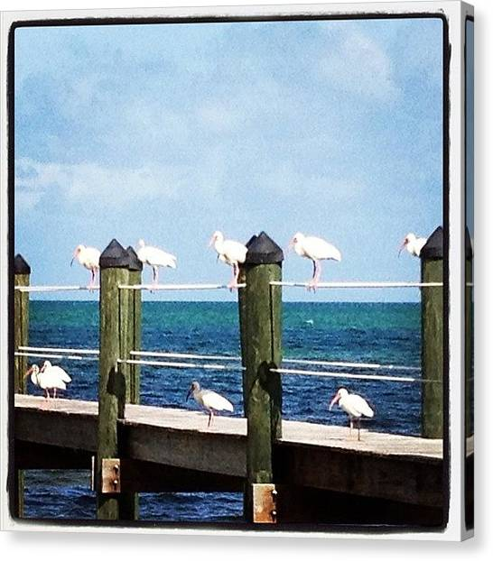Storks Canvas Print - Birds Of A Feather by Michele Green Williams