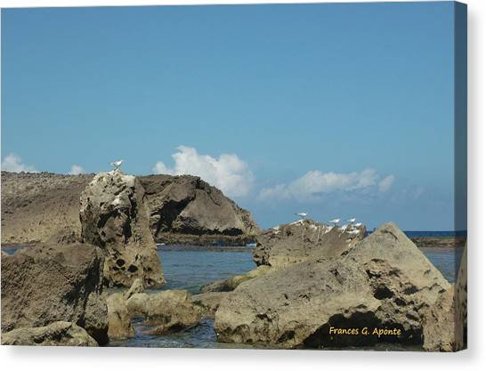 Birds Over The Rock Canvas Print by Frances G Aponte