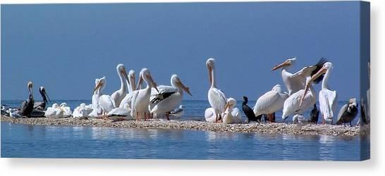 Birds Pelicans Of Cedar Key Canvas Print