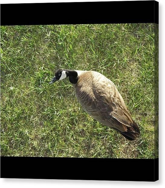 Geese Canvas Print - #birdseye #view Of A Bird's Eye by James Sibert