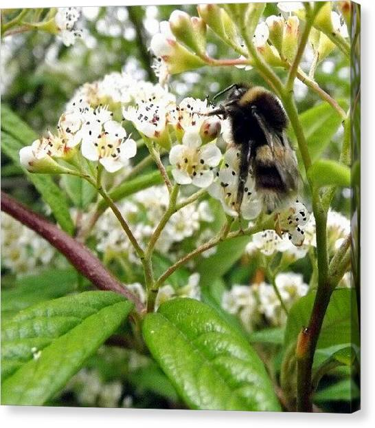 Flying Canvas Print - Bizzy Little Bee by Iain Carter
