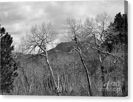 Black And White Aspen Canvas Print