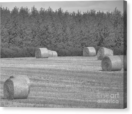 Black And White Hay Bales Canvas Print by Andrew May