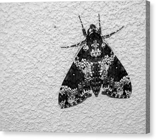 Black And White Moth Canvas Print