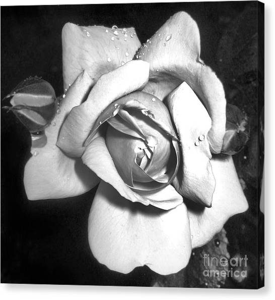 Black And White Rose Canvas Print by Tina Ann Byers