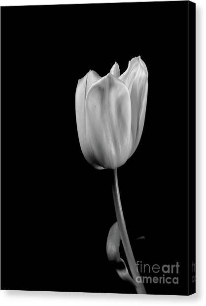 Black And White Tulip Canvas Print