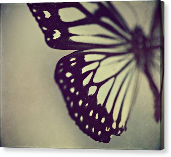 Insects Canvas Print - Black And White Wings by Amelia Kay Photography