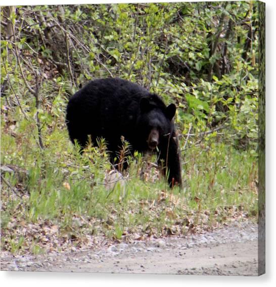 Black Bear Canvas Print by Mark Caldwell